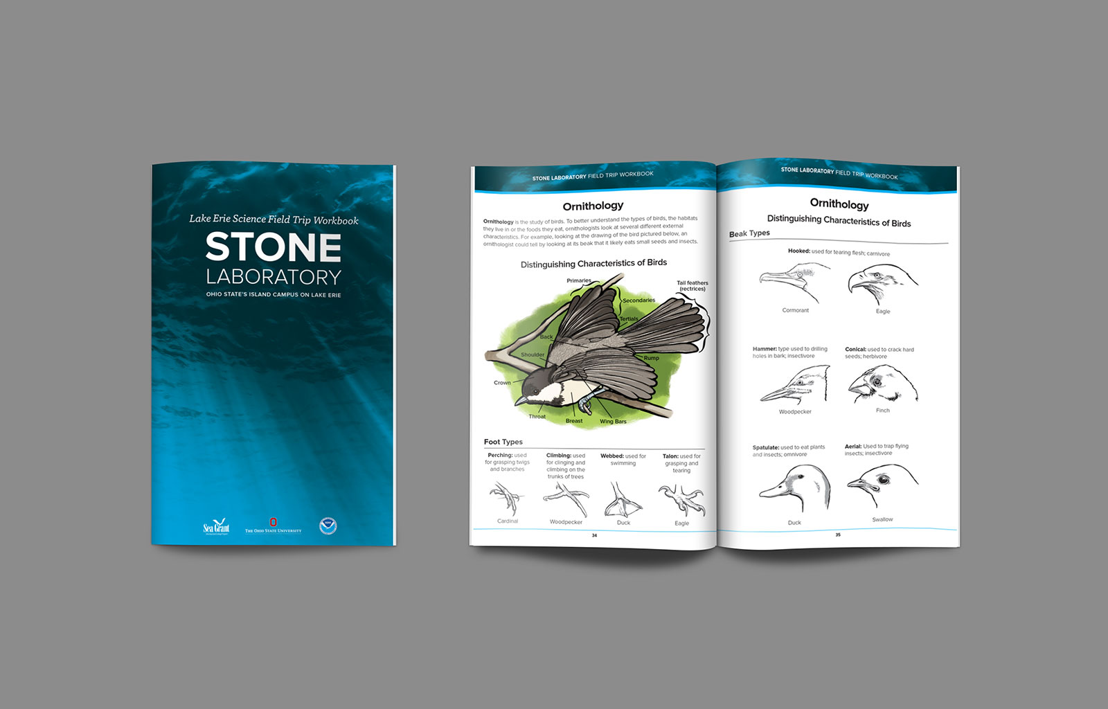Ohio State University Stone Lab Workbook Illustrations | Elden Creative Group